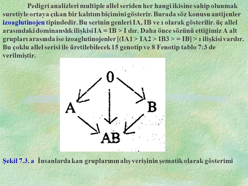 Pedigri analizleri multiple allel seriden her hangi ikisine sahip olunmak suretiyle ortaya çıkan bir kalıtım biçimini gösterir. Burada söz konusu antijenler izoaglutinojen tipindedir. Bu serinin genleri IA, IB ve ı olarak gösterilir. üç allel arasındaki dominanslık ilişkisi IA = IB > I dır. Daha önce sözünü ettiğimiz A alt grupları arasında ise izoaglutinojenler [(IA1 > IA2 > IB3 > = IB] > ı ilişkisi vardır. Bu çoklu allel serisi ile üretilebilecek 15 genotip ve 8 Fenotip tablo 7:3 de verilmiştir.